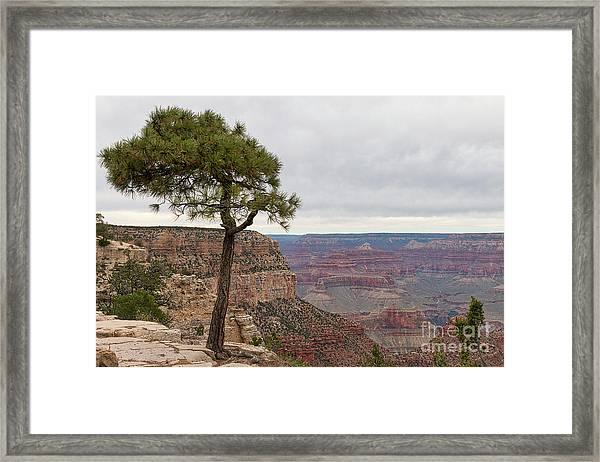 Fearless Tree Framed Print