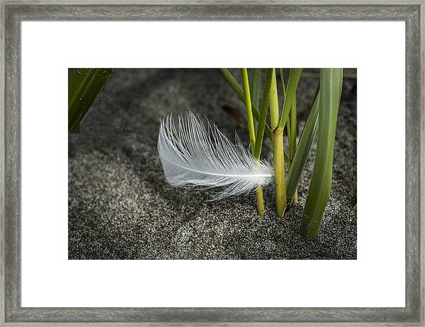 Feather And Beach Grass Framed Print