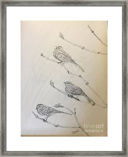 Feathers Friends Framed Print