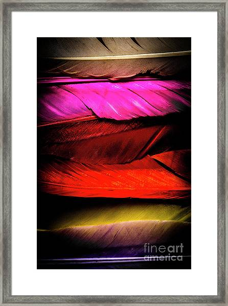 Feathers Of Rainbow Color Framed Print