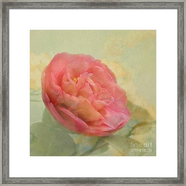 February Camellia Framed Print