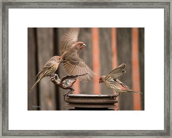 Feeding Finches Framed Print
