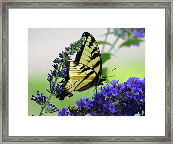 Feeding From A Nectar Plant Framed Print