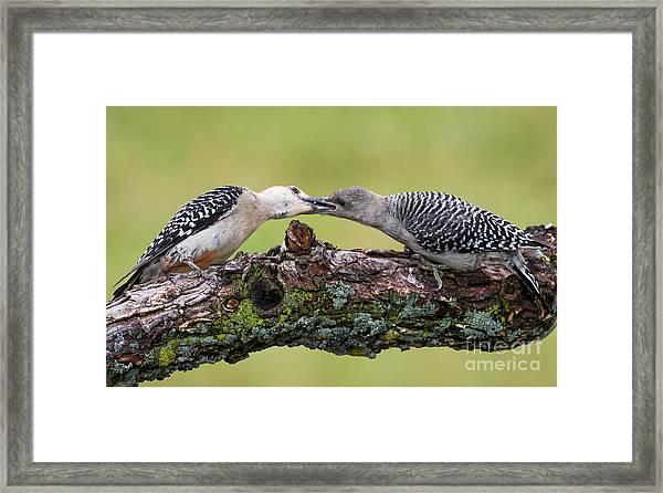 Feeding Time Framed Print