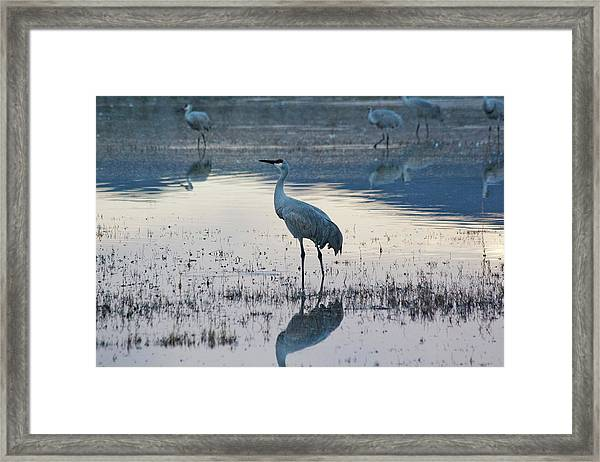 Framed Print featuring the pyrography Feeling Blue by Michael Lucarelli