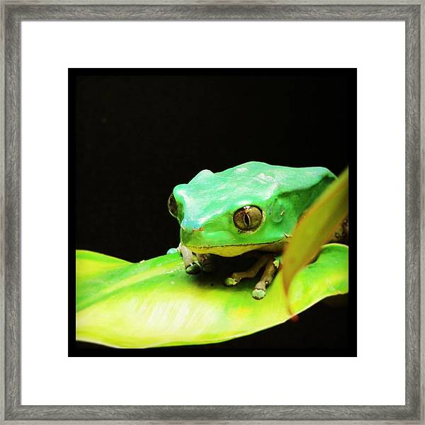 Feeling Froggy Framed Print