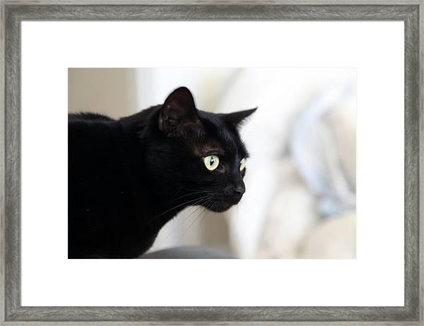 Feline On The Prowl Framed Print