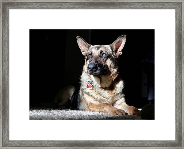 Female German Shepherd Framed Print