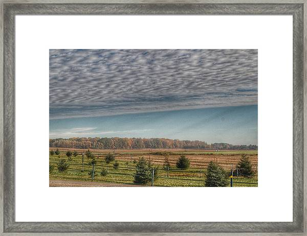 9017 - Fences, Firs And Fall Framed Print