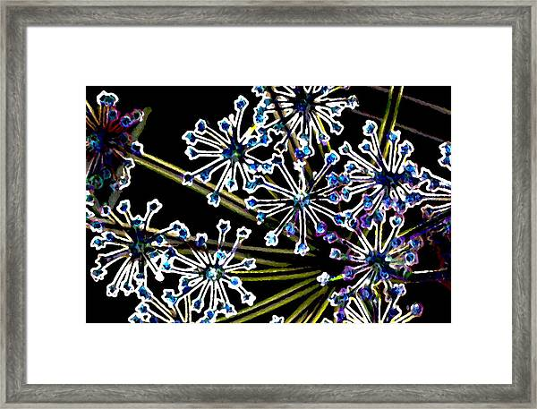 Fennel Inflorescence In Neon 2 Framed Print