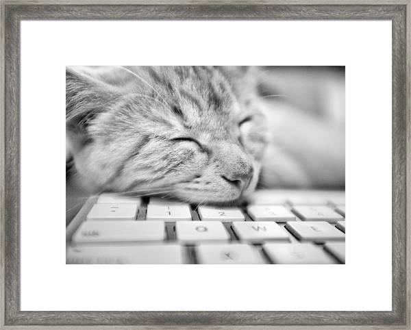 Fergus Asleep Framed Print