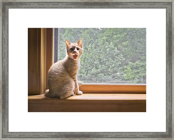 Fergus At The Window Framed Print