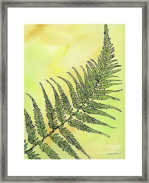 Fern 1 Framed Print
