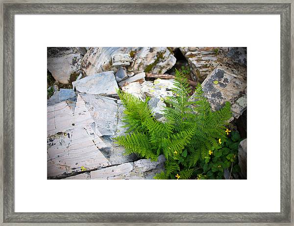 Fern Among Glacial Rock Framed Print