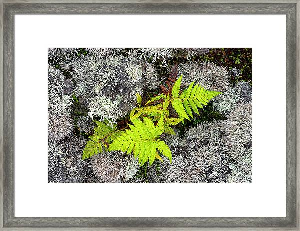 Fern And Lichen Framed Print