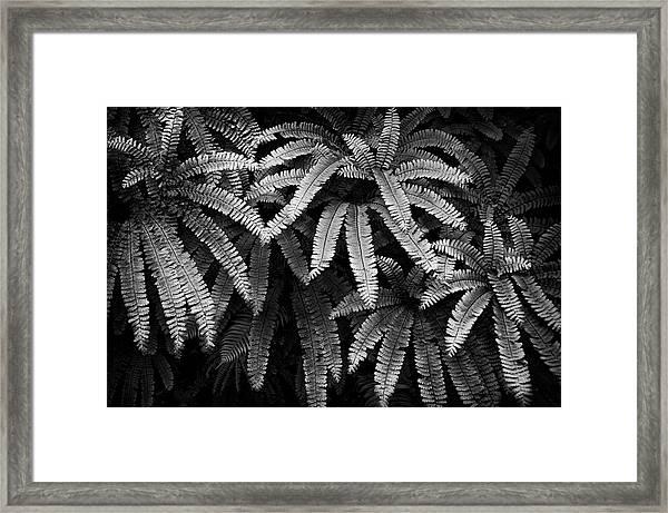 Fern And Shadow Framed Print