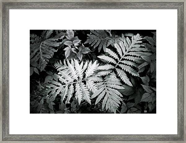 Fern At Bald Rock Framed Print
