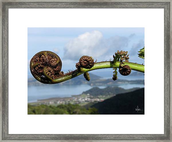 Fern Fiddlehead Framed Print