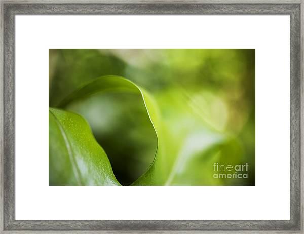Fern Leaf Macro Framed Print