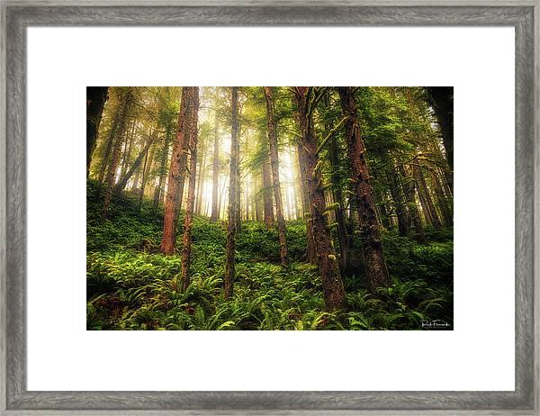 Ferngully Framed Print