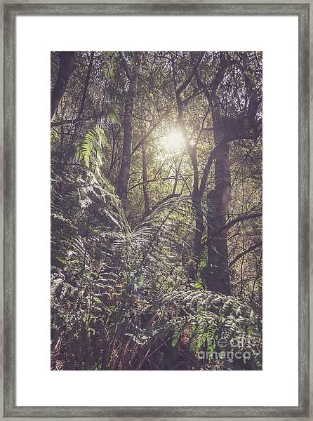 Ferns And Sunshine Framed Print