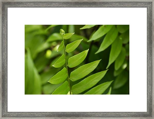 Ferns Galore Framed Print