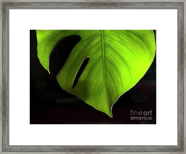 Fhgreen Framed Print