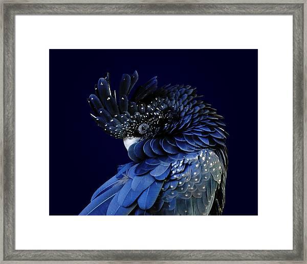 Fibonacci Cockatoo Framed Print
