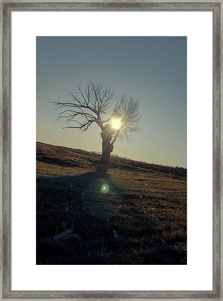 Field And Tree Framed Print