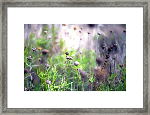 Field Flowers Framed Print