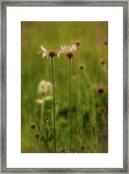 Field Of Flowers 3 Framed Print