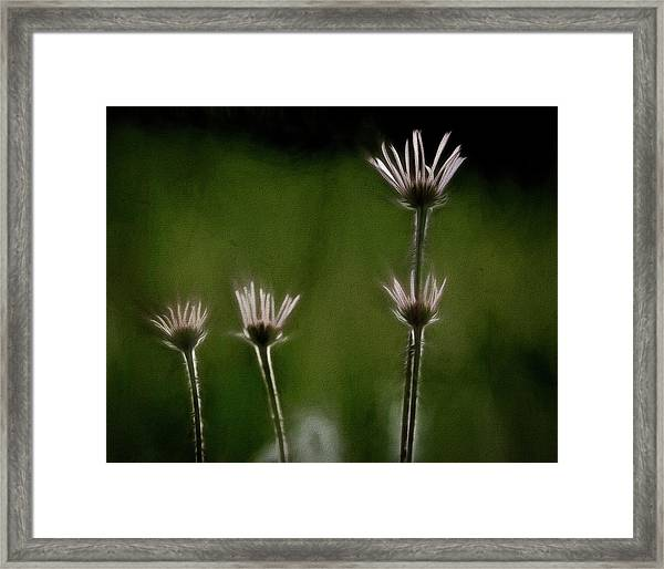 Field Of Flowers 4 Framed Print