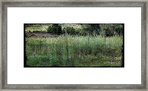 Field Of Grass Framed Print