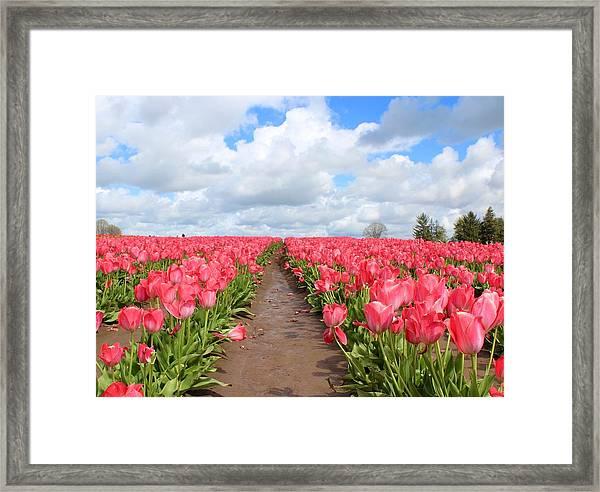 Field Of Pink Framed Print