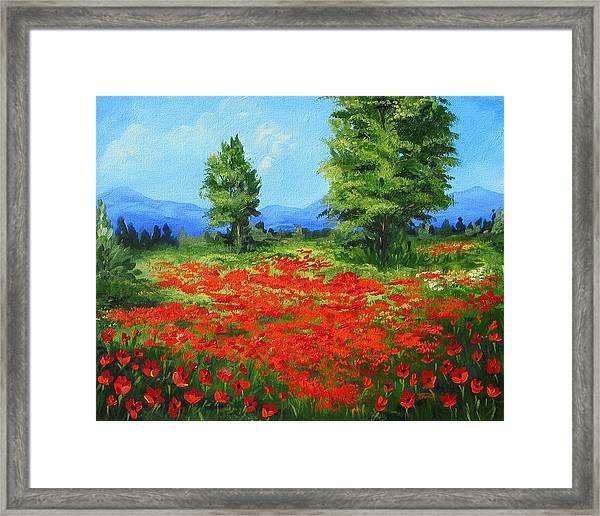 Field Of Poppies IIi Framed Print