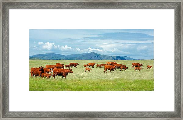Field Of Reds Framed Print