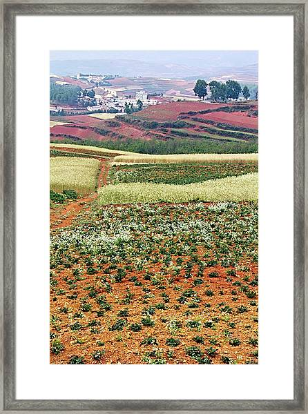 Fields Of The Redlands - 2 Framed Print
