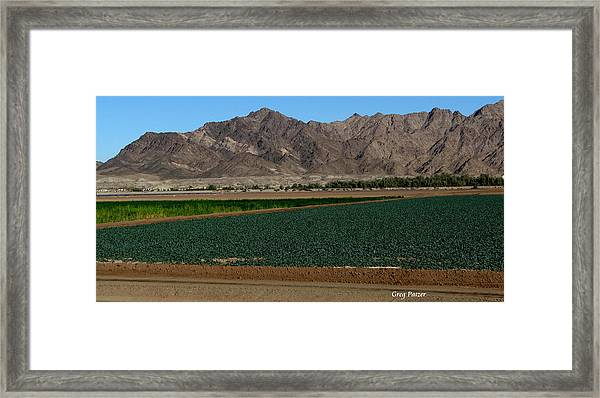 Fields Of Yuma Framed Print by Greg Patzer