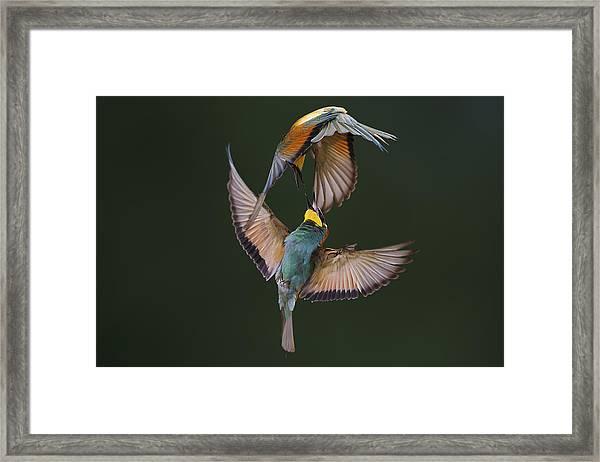 Fight Between Rainbows Framed Print