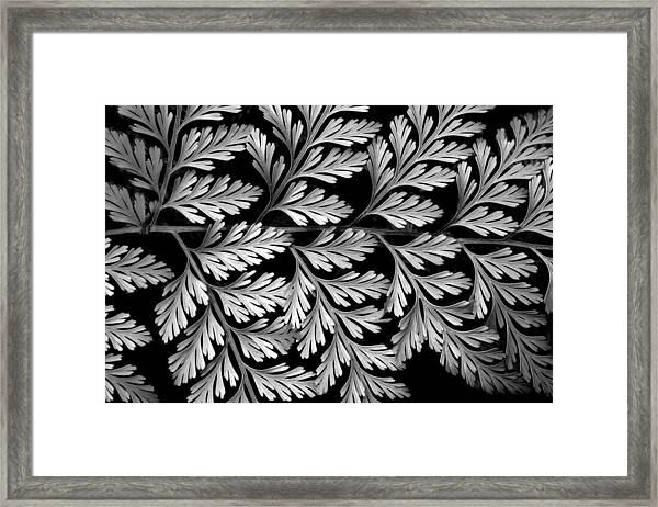 Filigree Fern Framed Print