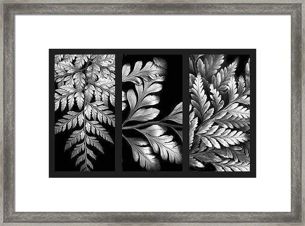 Filigree Fern Triptych Framed Print