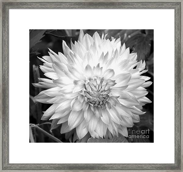 Filter Series 101 Framed Print