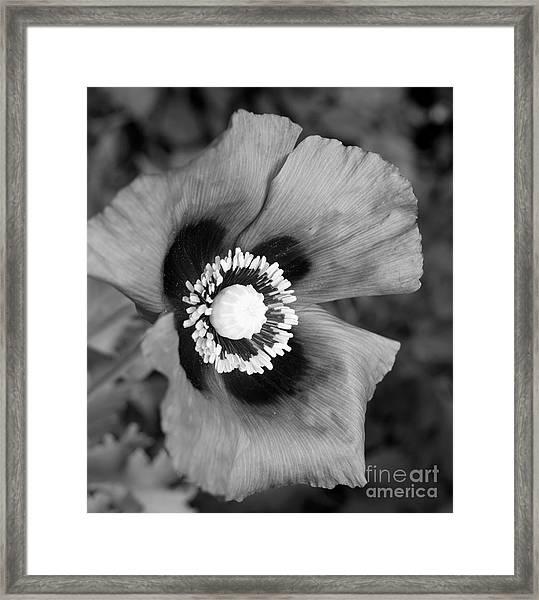 Filter Series 102 Framed Print