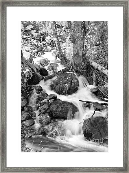 Filter Series 103 Framed Print