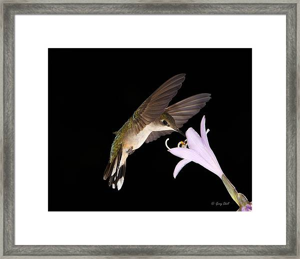 Final Snack Framed Print