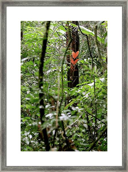Find Love Wherever You Can Framed Print