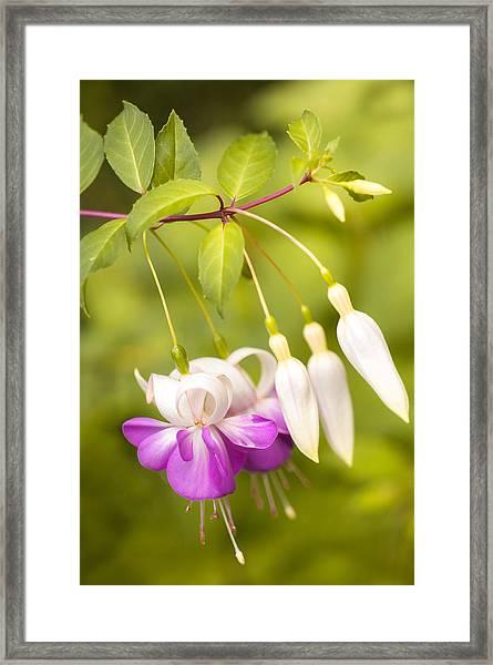 Finding Fuchsia Framed Print