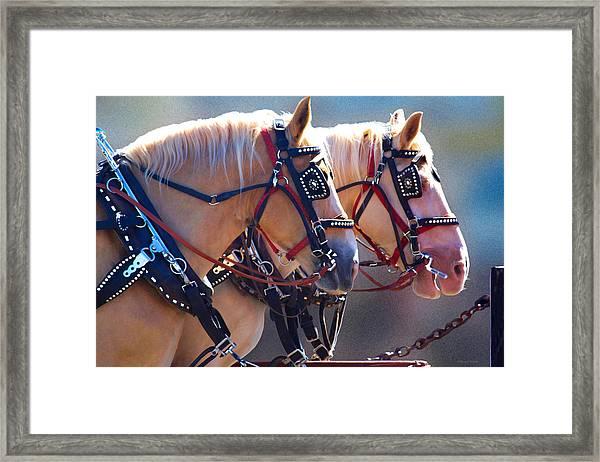 Fire Horses Framed Print