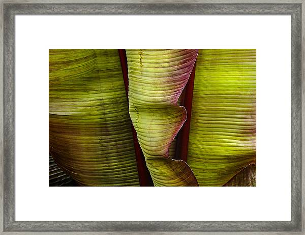 Fire Palm Iv Framed Print