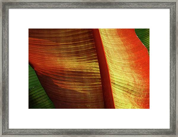 Fire Palm Framed Print